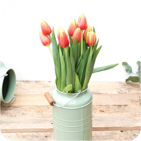 Paquete de Tulipanes Holandeses