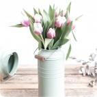 Paquete de Tulipanes Holandeses MELROSE