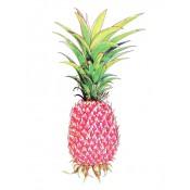 Ananas Rosa