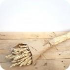 Paquete de Trigo Natural (Phalaris)