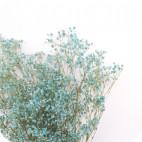 Paquetón de Paniculata