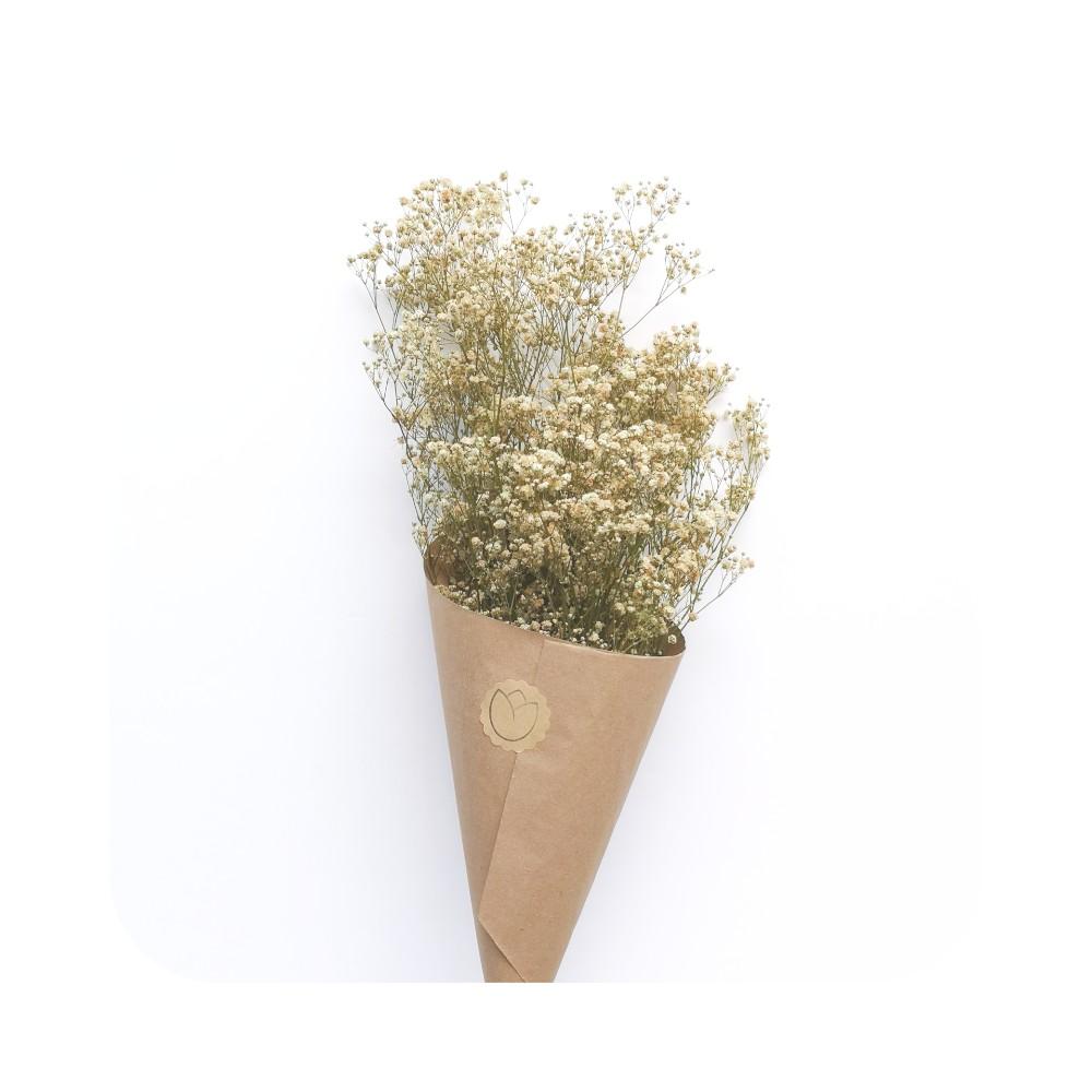 Paquete De Paniculata Natural  Preservada