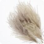 Paquete de Miscanthus Natural