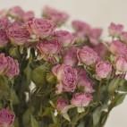 Paquete de Rosas Mini Preservadas