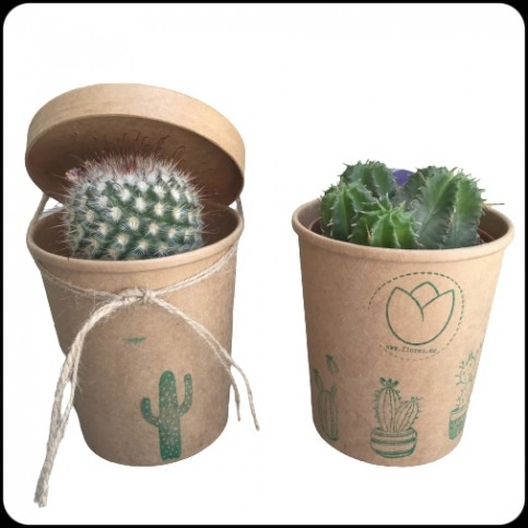 Cactus POPUP