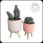 Pack 2 Cactus con maceta NØrdic