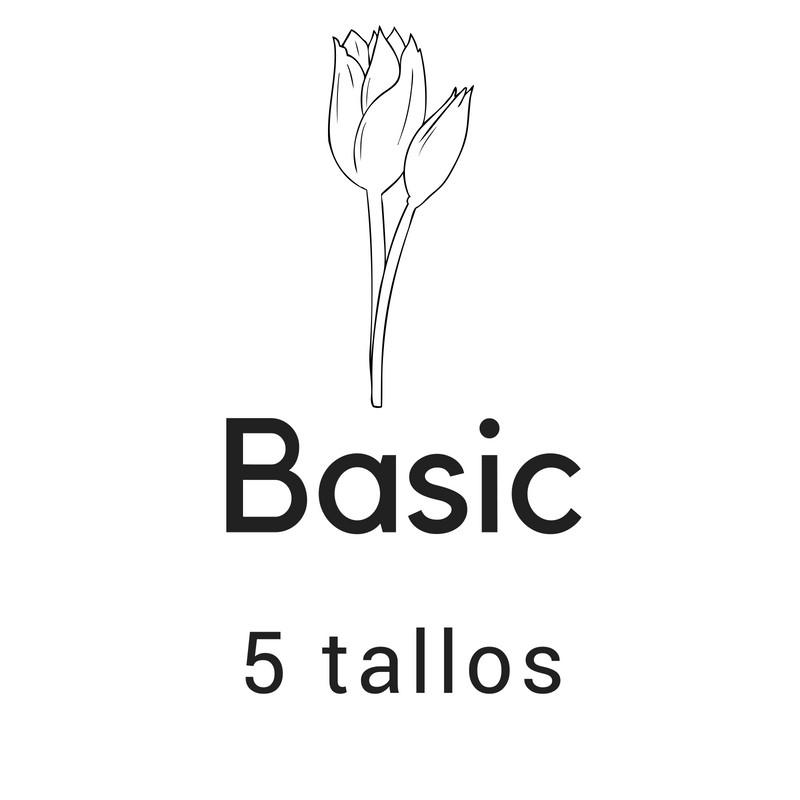 Basic 5 tallos