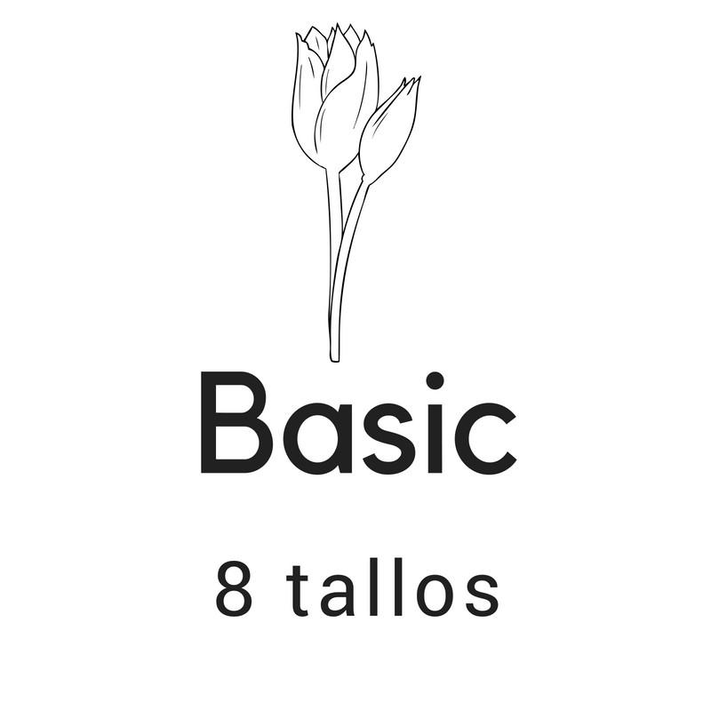 Basic 8 tallos